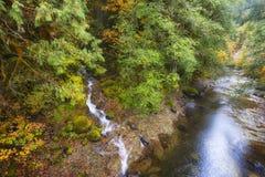 Autumn Colors op de Pas Toneelbyway van McKenzie pas-Santiam stock fotografie