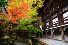 Autumn Colors på den Eikando templet i Kyoto Arkivbild