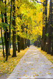 Autumn colors in the park Royalty Free Stock Photography