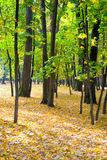 Autumn colors in the park Royalty Free Stock Photos