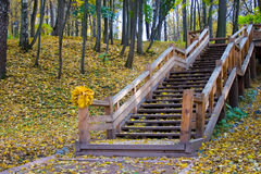 Autumn colors in the park royalty free stock photo