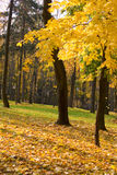 Autumn colors in the park Royalty Free Stock Image