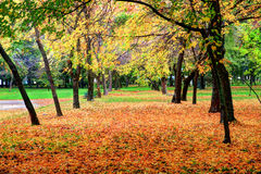 Autumn colors. Park alley in October autumn colors Stock Photo