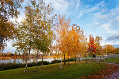 Autumn Colors in the Park Stock Image