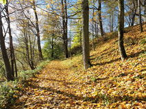 Autumn colors in park, Lithuania Royalty Free Stock Image