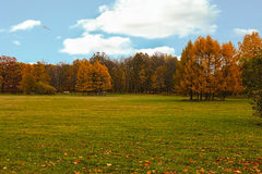 Autumn colors in the park. Royalty Free Stock Photo