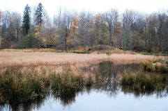 Autumn colors in pastel. Fall is coming to an end but there are still autumn colors in natur Stock Photo