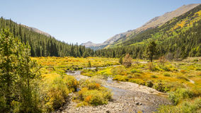 Autumn Colors, Pine Valley, Collegiate Peaks Wilderness, Pike an Royalty Free Stock Photos
