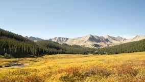 Autumn Colors, Pine Valley, Collegiate Peaks Wilderness, Pike an Royalty Free Stock Images