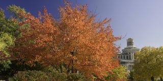 Autumn colors Stock Images