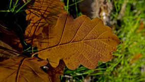 Autumn colors on plant Stock Images