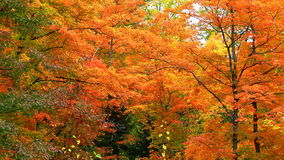 Autumn colors in Quebec, North America. Autumn colors in Quebec, Canada, North America royalty free stock photography