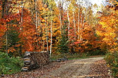 Autumn colors in Quebec, North America. Autumn colors in Quebec, Canada, North America stock image