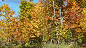 Autumn colors in Quebec, North America. Autumn colors in Quebec, Canada, North America stock photo