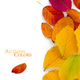Autumn colors, red and golden leaves, vertical border isolated o Royalty Free Stock Photography