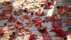 Autumn colors. Red maple leaves on gray wooden background. Selective focus. Blur effect stock video footage