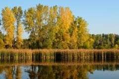 Autumn Colors Reflected en un lago Fotos de archivo