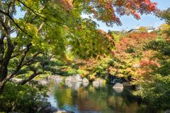 Autumn colors reflected in a Japanese Garden`s pool with Himeji Castle roof top above. Autumn colors reflected in the pond at Koko-en Garden with Himeji Castle royalty free stock photography