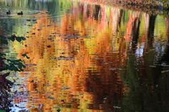 Autumn colors reflected in the lake. Perspective Stock Images