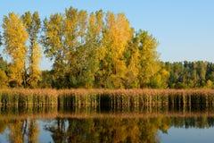 Autumn Colors Reflected på en sjö Arkivfoton
