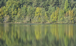 Autumn colors from trees reflecting on a calm lake in sweden Stock Image