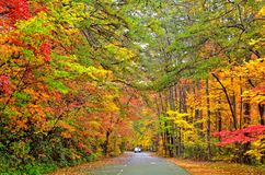 Autumn Colors on a Road. Fall colors around the road inside Tallulah Gorge National Park in north Georgia stock image