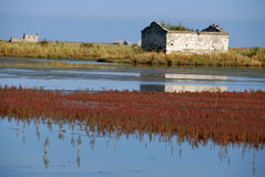 Autumn colors in salt marsh Stock Image