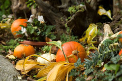 Autumn colors. Several pumpkins arranged in autumn design Royalty Free Stock Photo