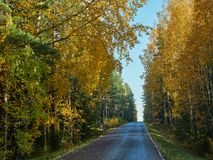 Autumn colors and small road in Finland stock image