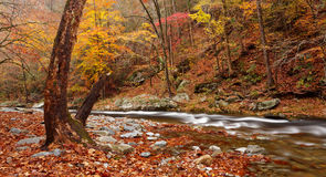 Autumn colors, smoky mountains Stock Images