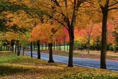 Autumn Colors smyckar träden längs en gata arkivfoto