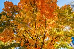 Autumn colors within southern city limits Royalty Free Stock Images