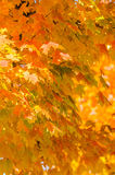 Autumn colors within southern city limits Stock Photography