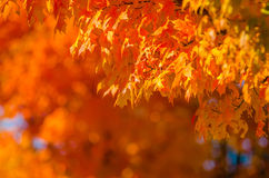Autumn colors within southern city limits Stock Photos