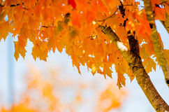 Autumn colors within southern city limits Stock Photo