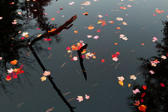 Autumn colors on still water Royalty Free Stock Images