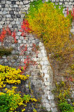 Autumn Colors on a Stone Wall Stock Image