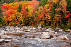 Autumn Colors Beside Stream Royalty Free Stock Images