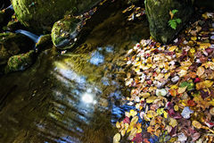 Autumn colors in stream Royalty Free Stock Photos