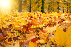 Autumn colors with sun light in park Stock Photos