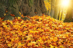 Autumn colors with sun light in park Royalty Free Stock Images