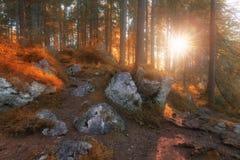 Autumn colors sunny morning woodland. Autumn colors warm sunny morning woodland royalty free stock images
