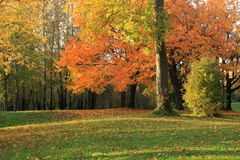 Autumn colors at sunset. Royalty Free Stock Photos