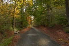 Autumn2. Autumn colors in sunset, forest and trees Royalty Free Stock Image
