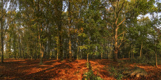 Autumn3. Autumn colors in sunset, forest and trees Royalty Free Stock Images