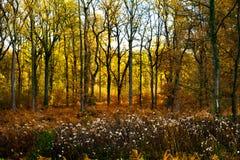 Autumn Colors sur Forest Border, a défraîchi les fleurs sauvages et les fougères photographie stock libre de droits