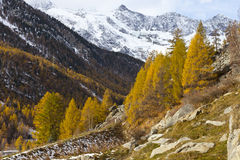 Autumn colors forest and snow mountain peaks in Sw Stock Photo