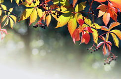 Autumn colors texture with bokeh Royalty Free Stock Images