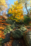 Autumn colors - tree and boulders Royalty Free Stock Photo
