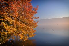 Autumn colors. Tree draped in bright autumn colors leaning over the lake with mountains in the background stock photo